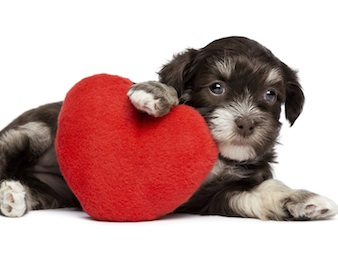Does Your Pet Have A Healthy Heart