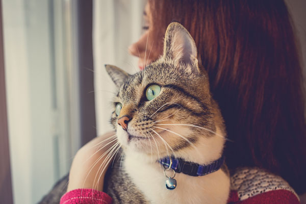 Cute cat watching and looking on woman's arm in home