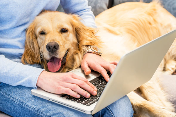 Woman typing on laptop while dog lays in her lap